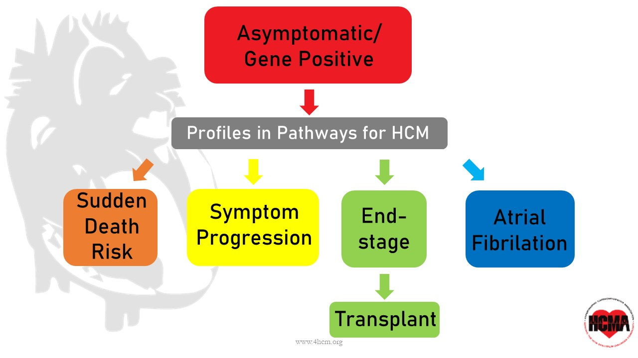 HCM Pathways  (Click to enlarge)